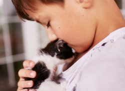 A little boy holds a black and white kitten on his shoulder